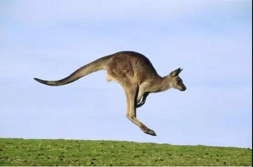 谁说移民都是高大上?平价亲民版澳洲移民了解一下